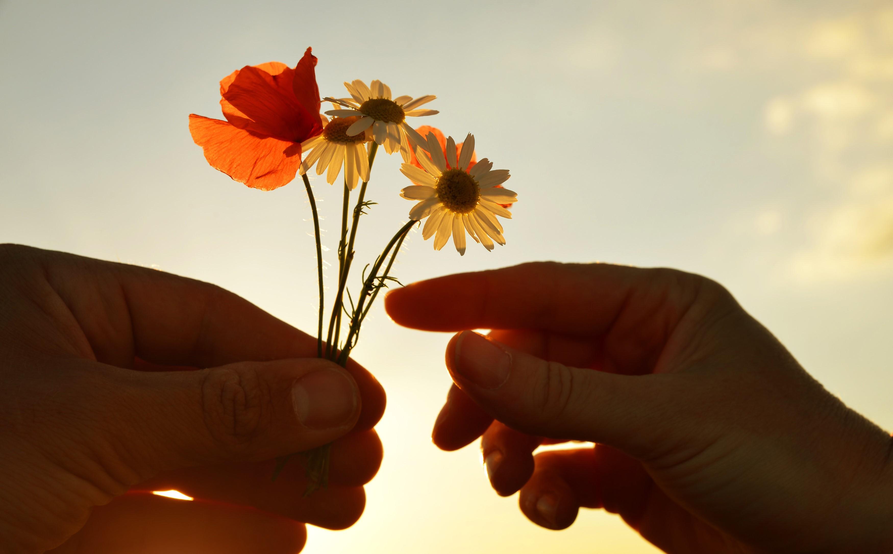 flower, gift, kind